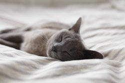 昼寝・仮眠で集中力アップ。仕事や勉強がはかどる